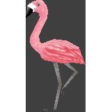 File:Mr.flamingocf.png