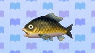 Carp encyclopedia (New Leaf)