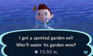 HNI 0078 spotted garden eel
