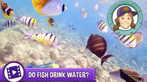Video ask tierney do fish drink water animal jam for Do fish drink water