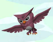 Owl Animal!!!