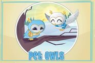 Pet-owls-are-back-in-animal-jam