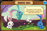 Bunnies only party pop up2