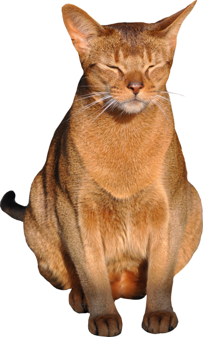 Transparent Background Cats File:cat Png With Transparent
