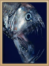 Deep Blue Viperfish
