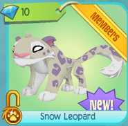 Diamond-Shop Snow-Leopard