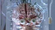 Tomaru Brain