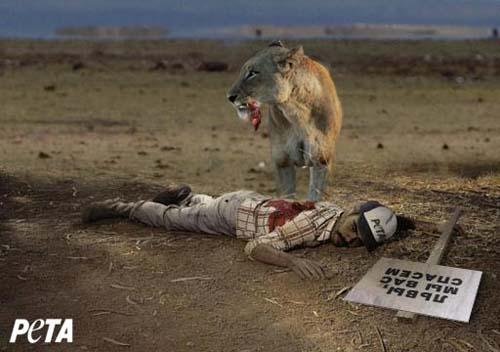 Картинки лев смешные