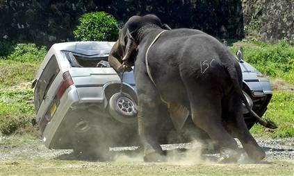 File:ElephantPoloMinibus.jpg