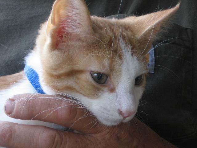 File:1235440714 Kitty up close.JPG
