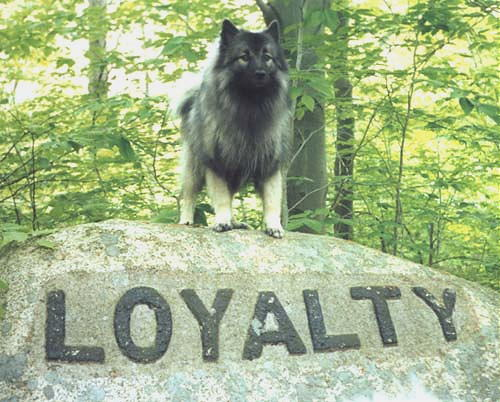 File:1196274447 Loyalty3.jpg