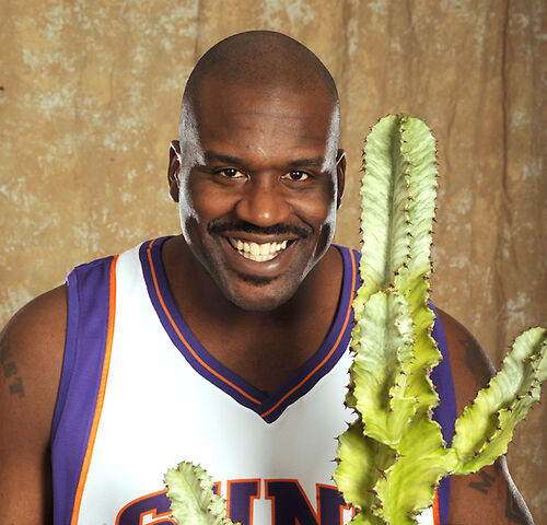 File:Shaq cactus.jpg