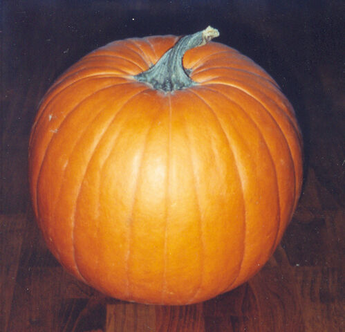 File:Pumpkin.jpg