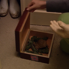 Buster puts his pet turtle in Oscar's box with