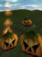 Pumpkin Kin Live