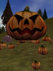 Majestic Pumpkin Live