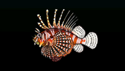 LionfishACP