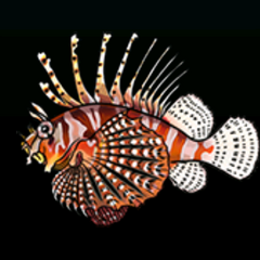 Lionfish - Rarity: Rare, Size: Medium