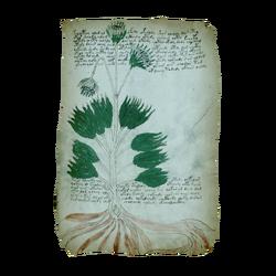 AC4BF Voynich Manuscript - Folio 34r.png