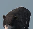 Database: Bear
