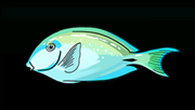 OceanSurgeonfishACP
