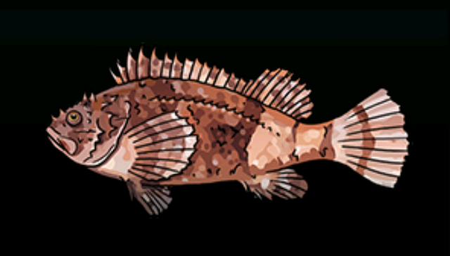 File:SpottedScorpionFishACP.png