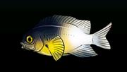 Bi-colorDamselfishACP