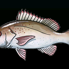 Mahogany Snapper - Rarity: Common, Size: Medium