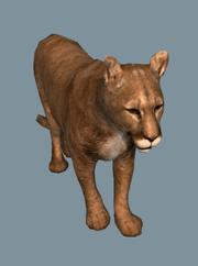 DB Cougar