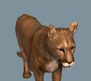Database: Cougar