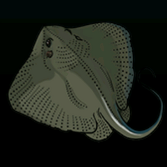 Stingray - Rarity: Very Rare, Size: Medium