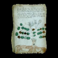 AC4BF Voynich Manuscript - Folio 34v