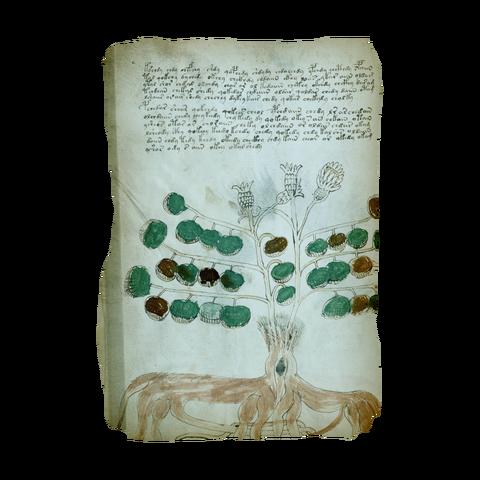 File:AC4BF Voynich Manuscript - Folio 34v.png