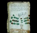 "Database: ""Voynich Manuscript"" - Folio 34v"