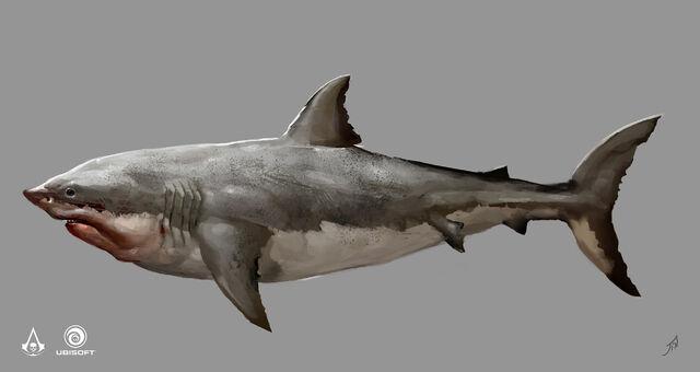 File:AC4 Shark - Concept Art.jpg