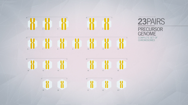 File:ACU Precursor Genome.png