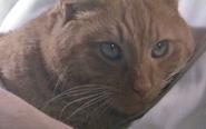 Jones the cat