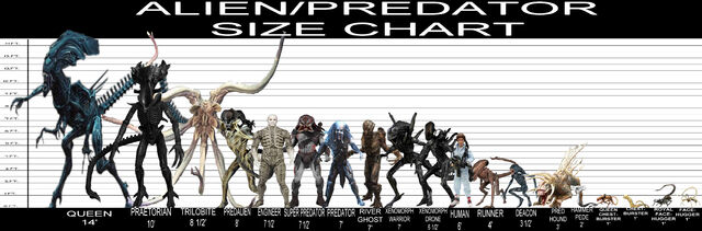 File:Alien and Predator Size Chart.jpg