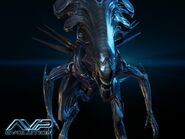 Alien-vs-predator-evolution 003