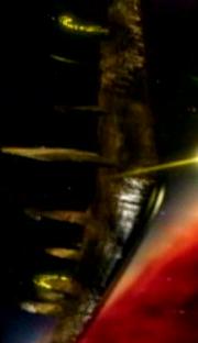 FirstoneShip 05