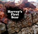 Harvey's First Scar