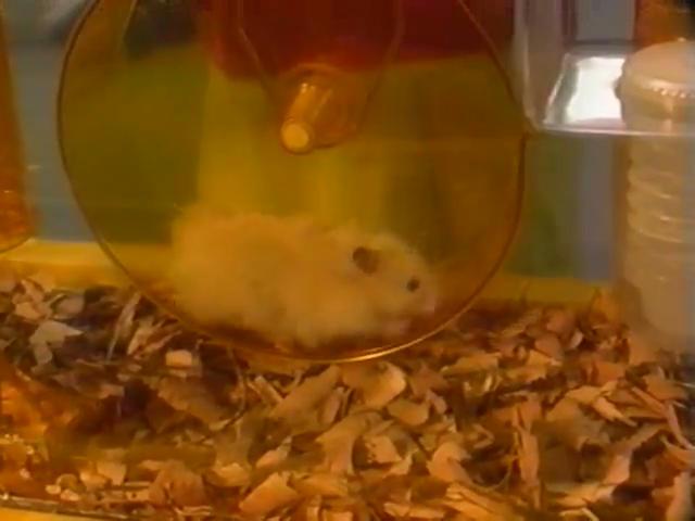 Zippity The Hamster Barney Wiki Fandom Powered By Wikia