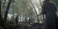 Argonne Forest