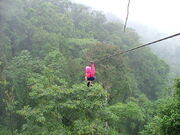 800px-Zip-line over rainforest canopy 4 January 2005, Costa Rica