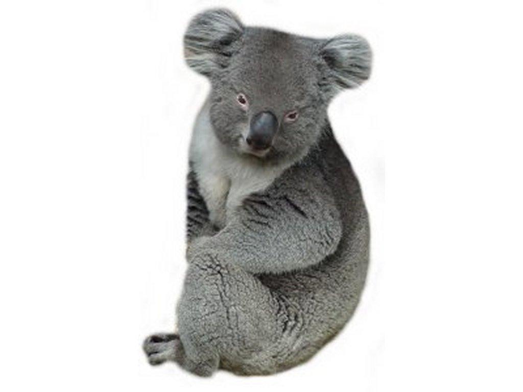 War Bears Koala Bear Beast Wars
