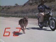 The.Bionic.Woman.S03E01.DVDrip.XviD-SAiNTS.avi 000437960