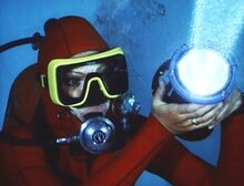 Sharks - Cynthia Grayland Signalling the sharks