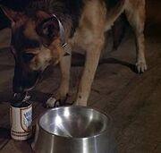 Max dog food