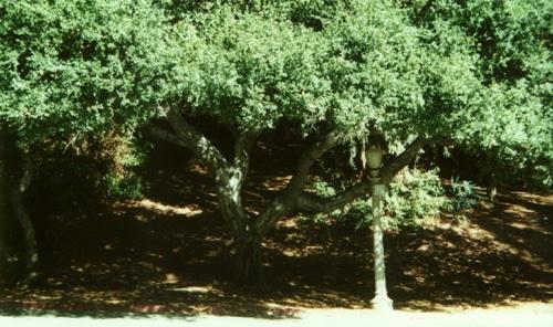 File:Griffithpark-lamppost.jpg