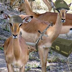 File:Impalabasecamp.jpg